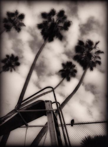 Bird On A Fence by Ray Carofano.