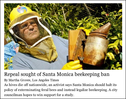 Santa Monica activist upset that feral bees are being exterminated.